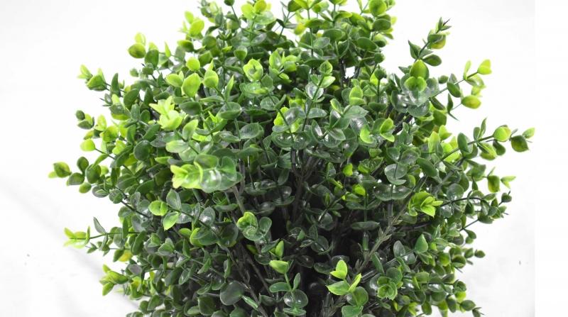 仿真植物厂家花卉绿植景观新鲜出炉