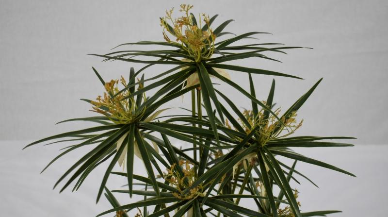 仿真植物盆景仿真植物带动绿色行业的发展
