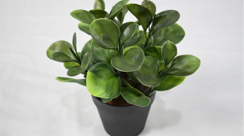仿真植物盆景现代人对仿真植物审美观的转变