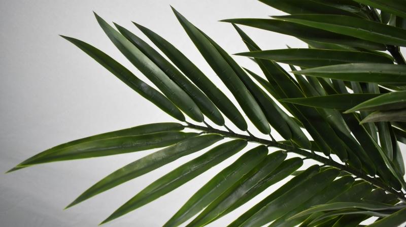 仿真植物墙仿真植物小盆栽的种类及特点