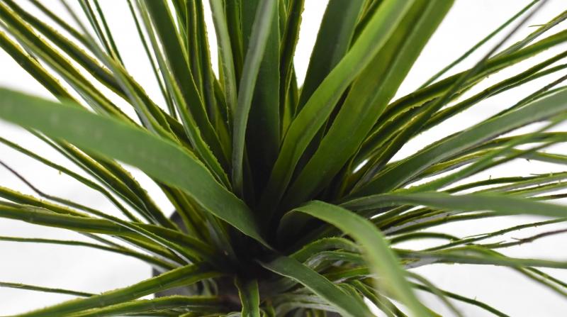 仿真植物厂家采购仿真发财树的好处和摆放